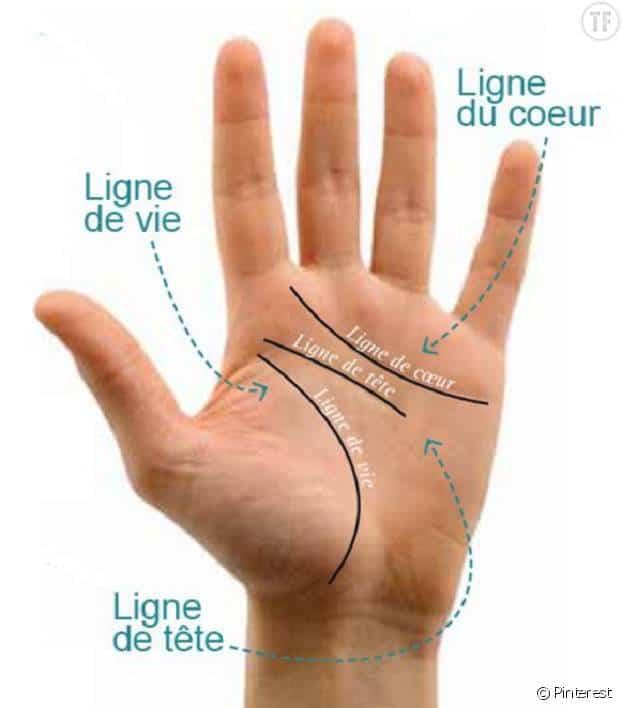 Les différentes lignes de la main