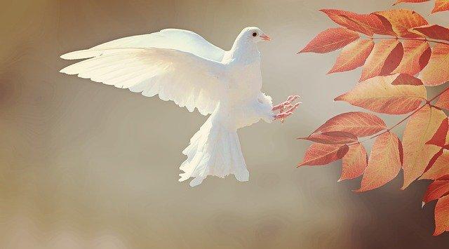 Message spirituel plume blanche