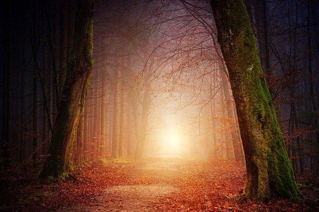 NDE EMI lumière au bout du tunnel au-delà
